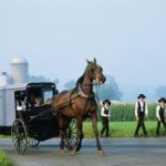 Amishbuggy1