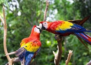 parrotrainforest_35223081_fotoliarf_2833_480x340